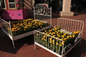 Flower beds, Portland, Oregon 2014
